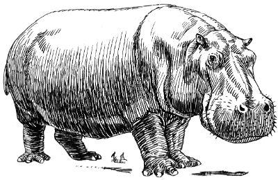 Hippopotamus_ 400 x 260